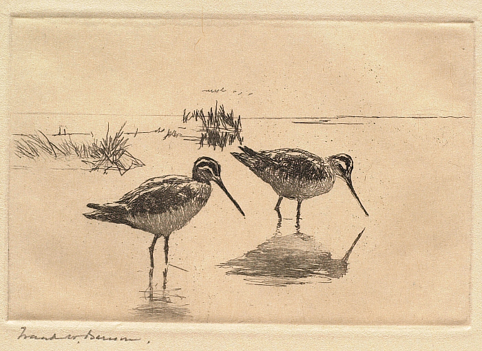 Two Sandpipers