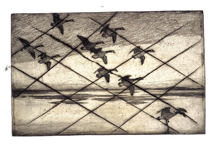 Geese Drifting Down