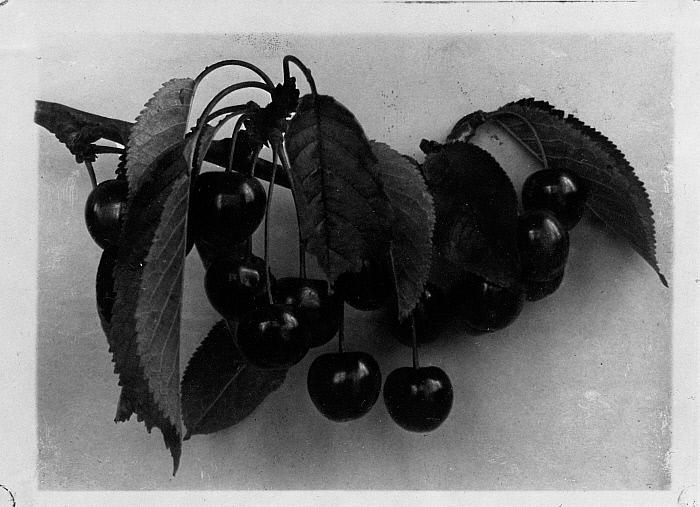 Still Life: Cherries
