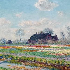 Tulip Fields at Sassenheim