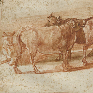 A Study of Cattle