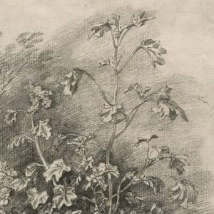 Study of Mallows